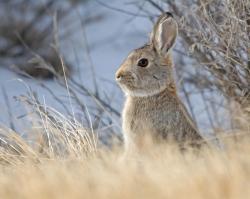 Волгоградца наказали за браконьерство по фото в соцсети