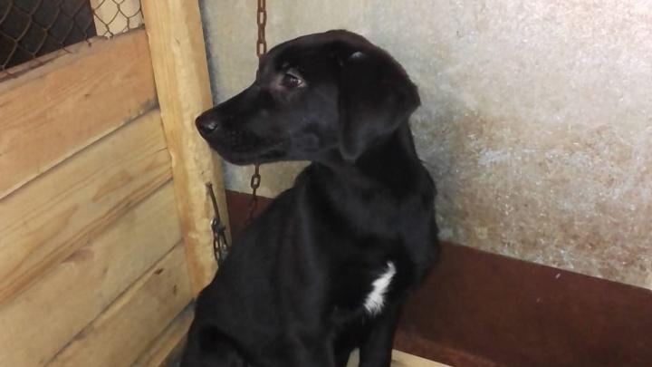 Двое новосибирцев привезли щенка в приют и протащили зоозащитницу на двери «Газели»