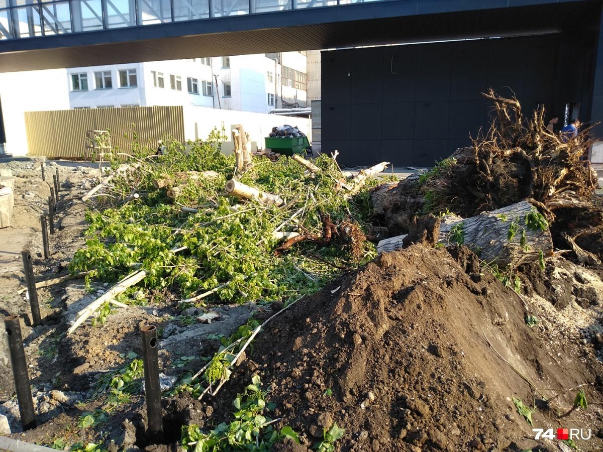 Уничтоженные деревья росли здесь несколько десятков лет