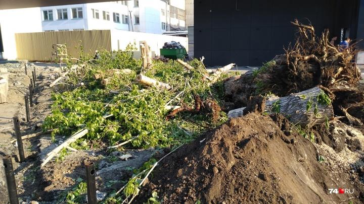 «Это были единственные здесь деревья»: в центре Челябинска на модной улице вырубили тополь и клён