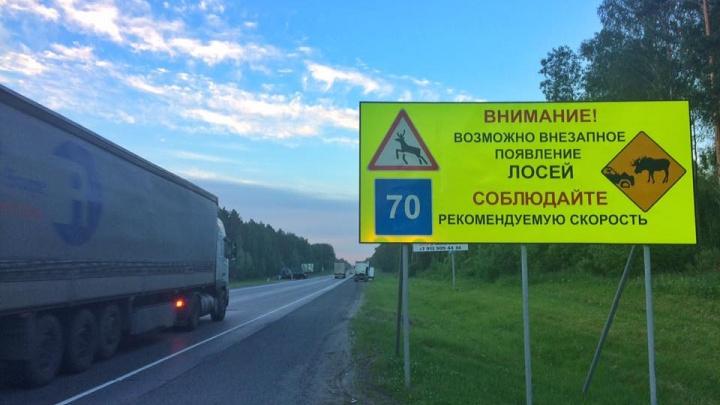 На трассах под Новосибирском появятся предупреждения о внезапных лосях