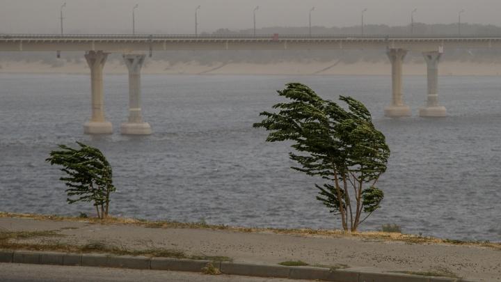 Волгоградскую область продует очень крепкими порывами ветра