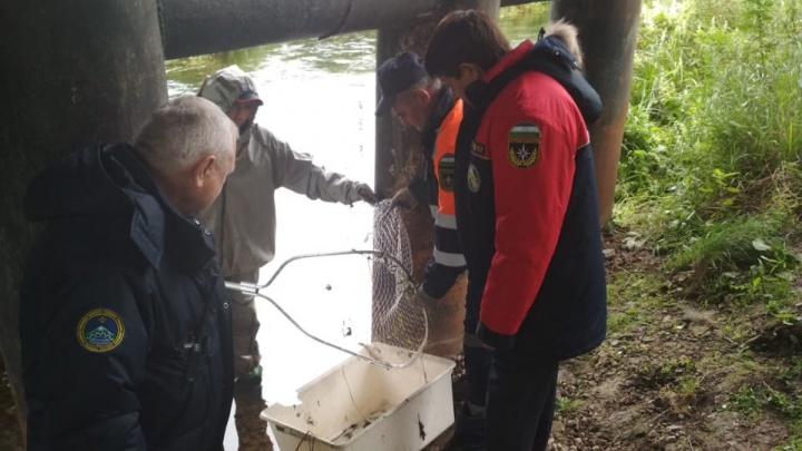 Председатель комиссии по ЧС о загрязнении реки Изяк: «Достали более 500 кг мёртвый рыбы»