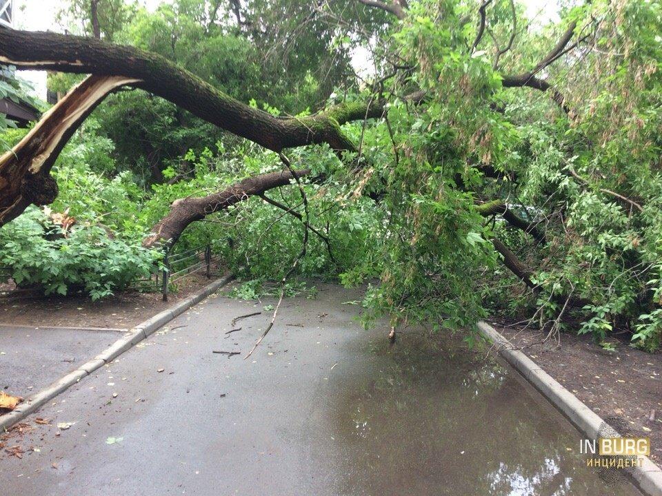 Упавшие деревья, затопленные подъезды: последствия ливня в Екатеринбурге в режиме онлайн