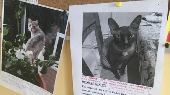 Жители тюменского микрорайона Комарово разыскивают живодера, убивающего кошек из арбалета