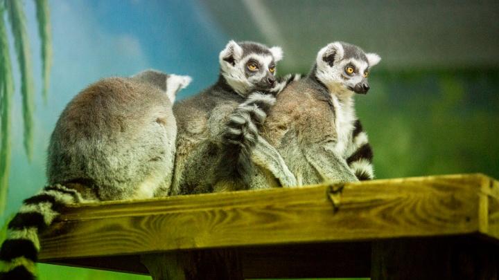 Скоро в спячку:новосибирский зоопарк изменил график работы