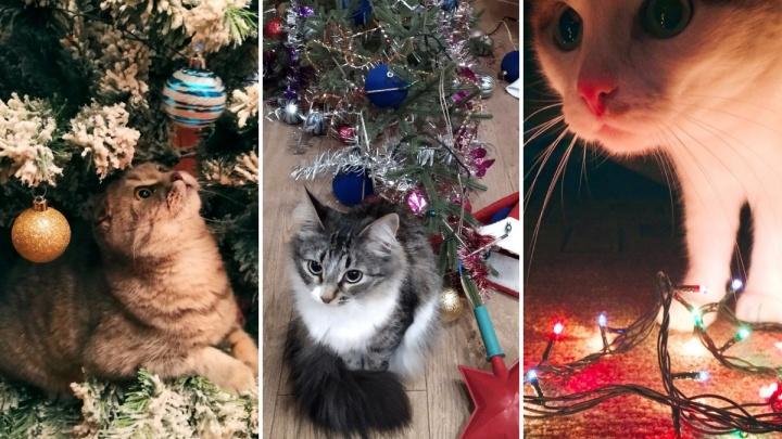 «Предоставь это мне, человек»: коты и собаки, которые лучше хозяев знают, как нарядить ёлку