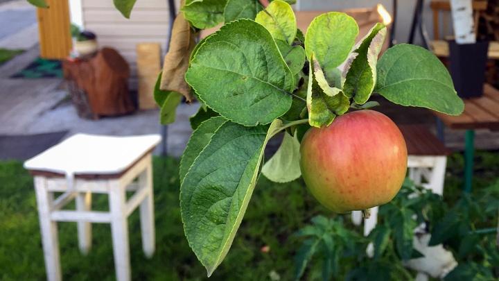 Жарим смородину, строим дом из кабачков: 10 способов борьбы с дачным урожаем
