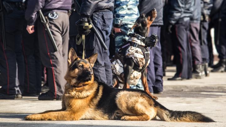 Новосибирская полиция заказала сухой корм для собак на 2,5 миллиона
