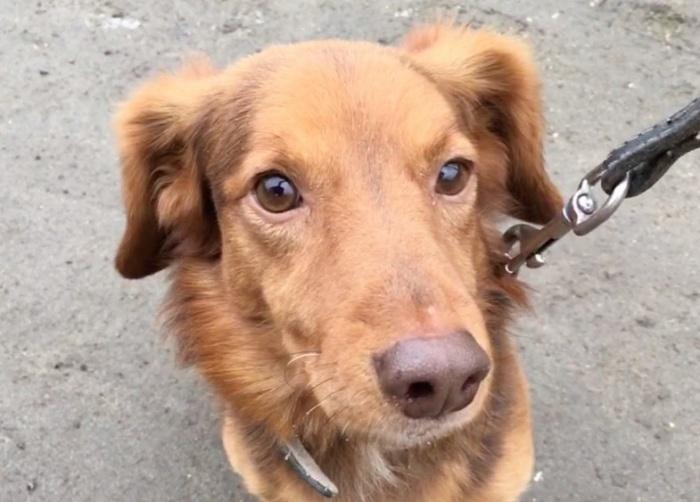 После того как пёс полностью выздоровеет, ему будут искать новых хозяев
