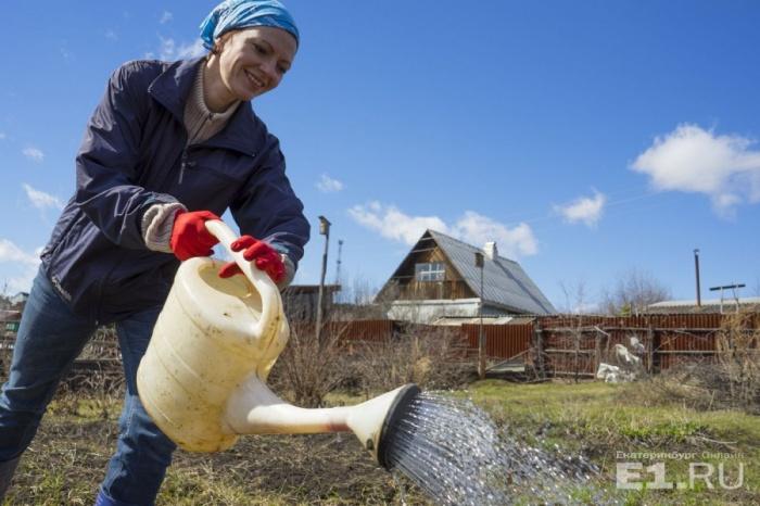 Чтобы вырастить богатый урожай огурцов, нужно6–8 литров воды на один квадратный метр земли