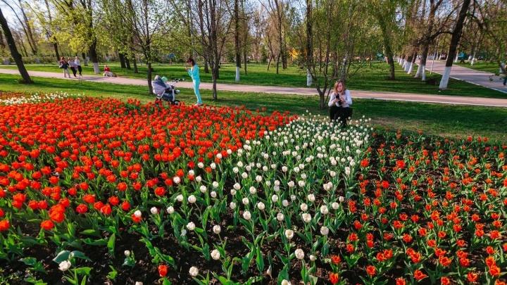 Как по заказу: жителей Самарской области порадует погода в праздничные выходные