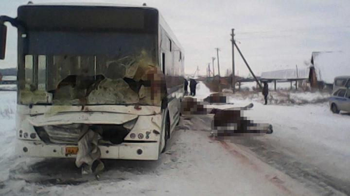 В Башкирии пассажирский Нефаз протаранил трех беременных лошадей: животные погибли