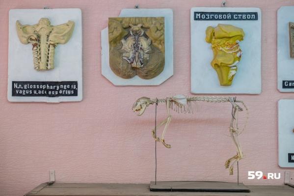 Мумия была одним из экспонатовколлекции анатомических редкостей и аномалий музея при городском морге Березников