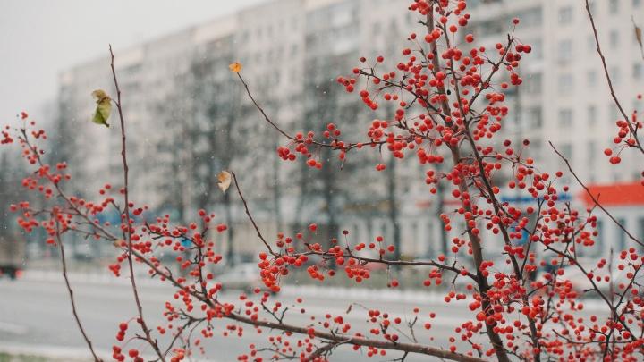 Тюменцев ждут теплые и снежные выходные: погода на три дня
