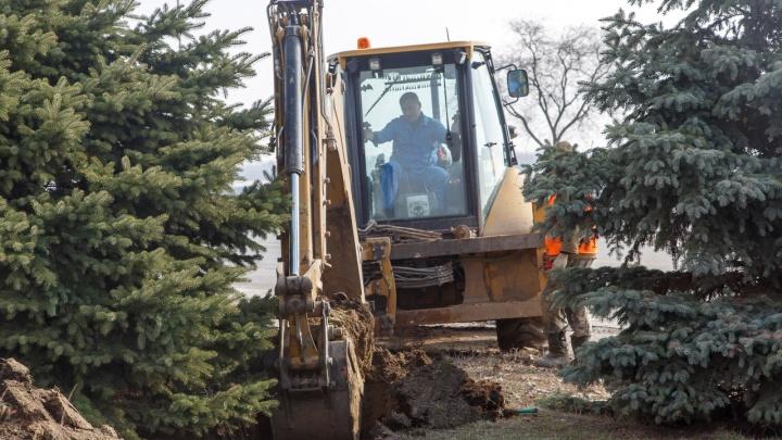 «Сколько — сами не знаем»: на набережной Волгограда снова выкорчевывают елки