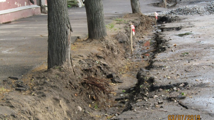 «Газоны превращаются в парковки для машин»: в Ярославле во время ремонта дорог повредили деревья