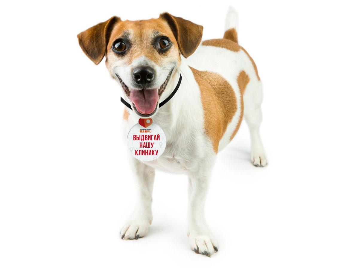Собаке, которая побывала в вашей ветеринарной клинике, можно дать такой жетончик