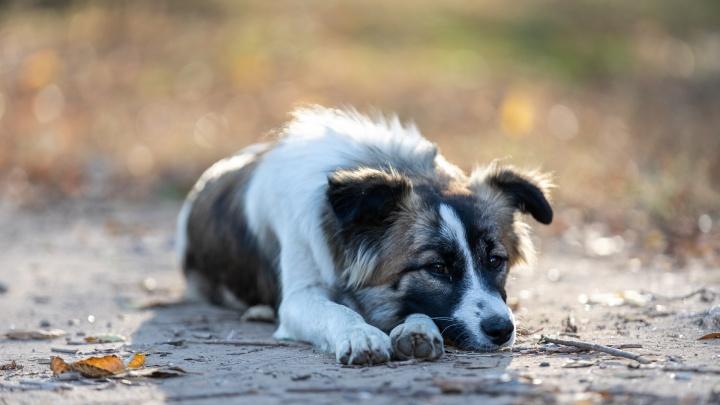 Мерзнут лапы и ушки: смотрим, как волгоградские пёсики встречают первые холода
