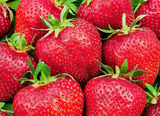 Сладкая «Кимберли» и урожайный «Альбион»: горожане увидят лучшие голландские сорта клубники