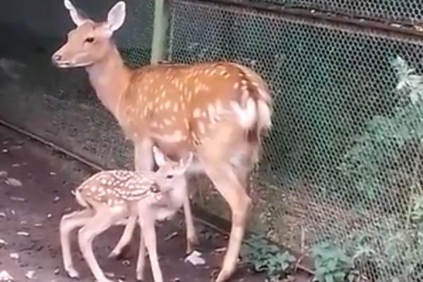 Малыши и их мамы чувствуют себя хорошо