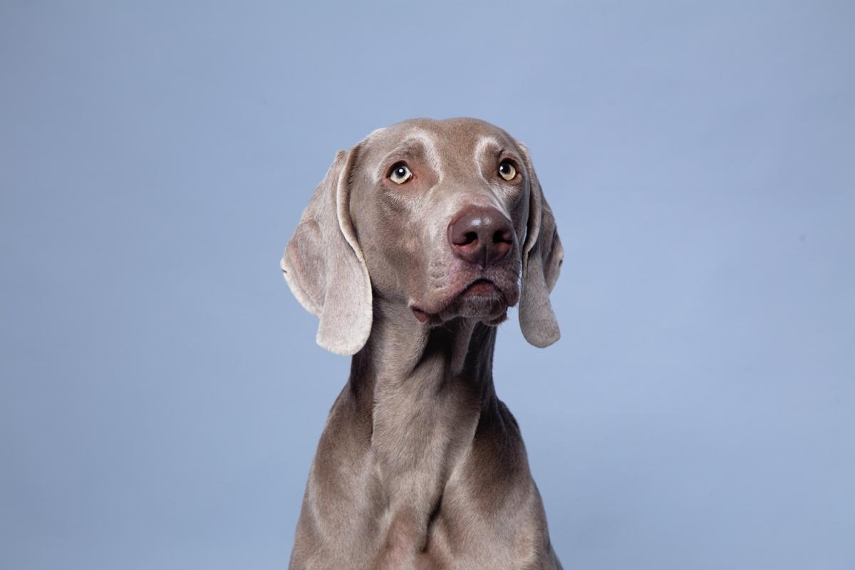 у собаки появился неприятный запах из пасти