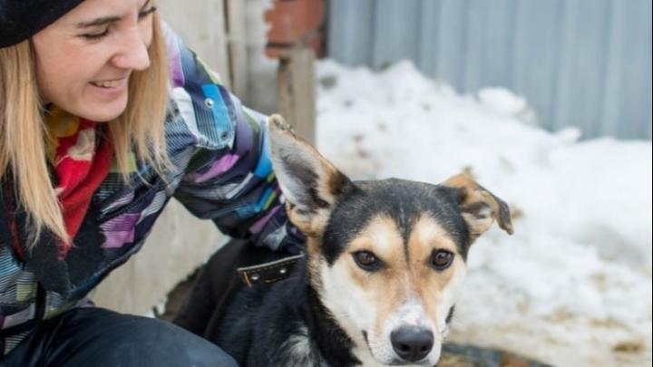 «Из-за нее люди пройдут мимо погибающих животных»: ответ на колонку девушки, которая против помощи котам и собакам