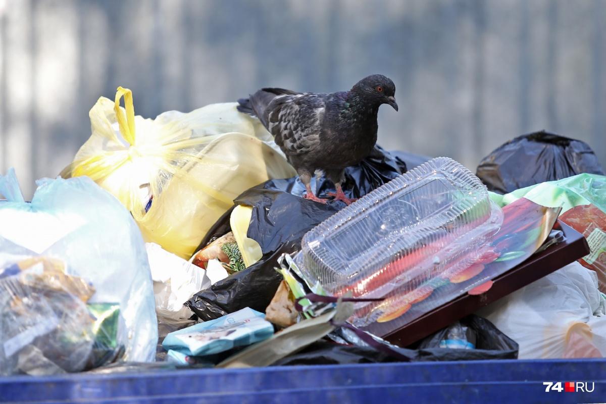 В Челябинске есть дворы, где не вывозили мусор неделями. В МУП «ГорЭкоЦентр» пообещали это учесть