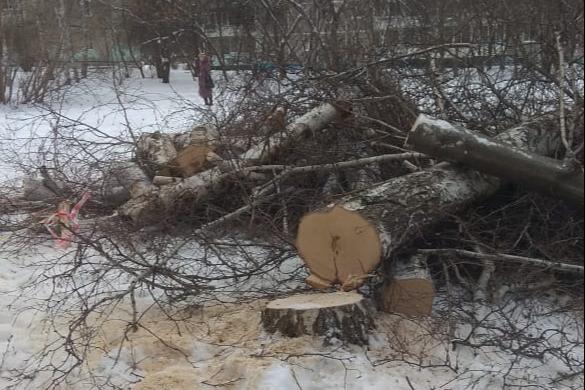 В Юго-Западном бизнесмен вырубает деревья. Жители района считают, что это незаконно