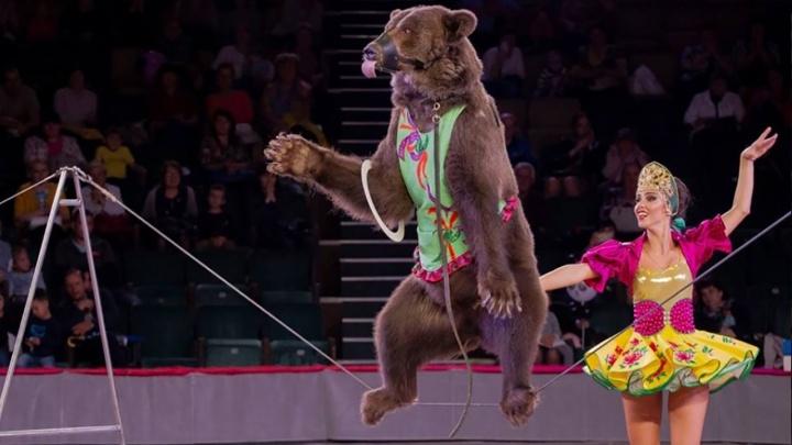 Омск захлестнули новогодние чудеса: династия Филатовых представила волшебную цирковую программу