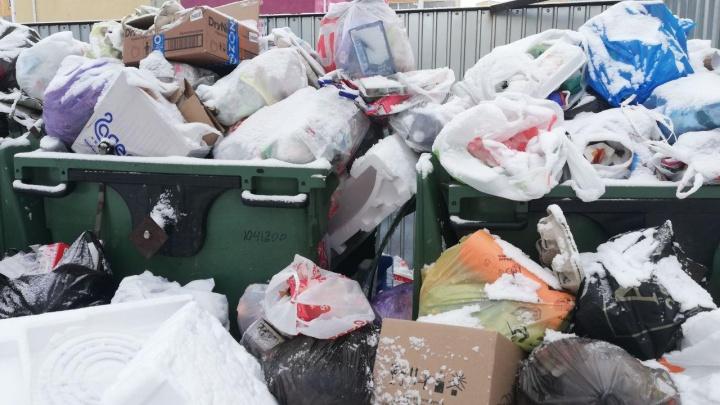 «Будем ждать нашествия крыс?»: жители Челябинска жалуются на новогодний мусорный коллапс