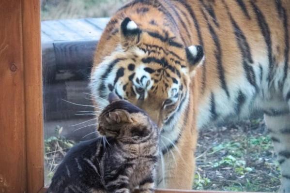 Ростовский кот Васька соблазнил москвичку Усладу