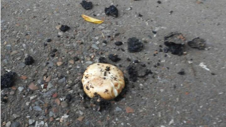 В Уфе из-под асфальта полезли грибы
