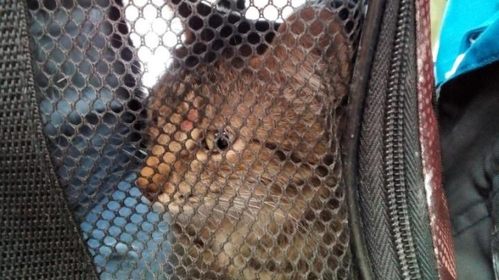 В Екатеринбурге спасли кошку, которая упала в шахту с высоты 12-го этажа