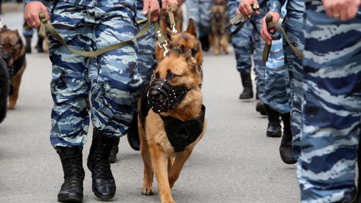 «УГНТУ оцепили, с собаками что-то ищут»: полиция проверила вуз на подозрительный предмет