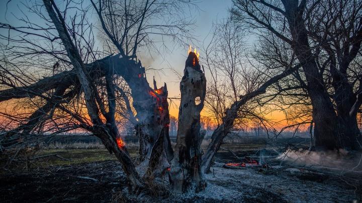 Горим! Самарский фотограф снял пугающие и прекрасные кадры пожара на берегу Самары