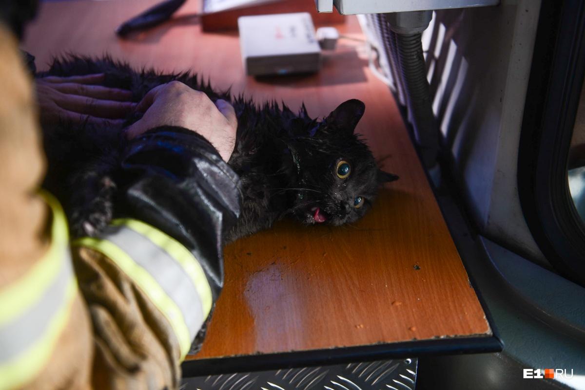 Когда кота вынесли с места пожара, он был без сознания