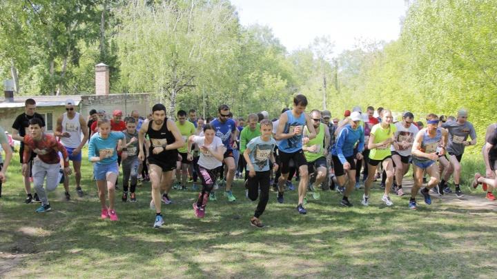 100 бегунов поздоровались с комаром в Бугринской роще