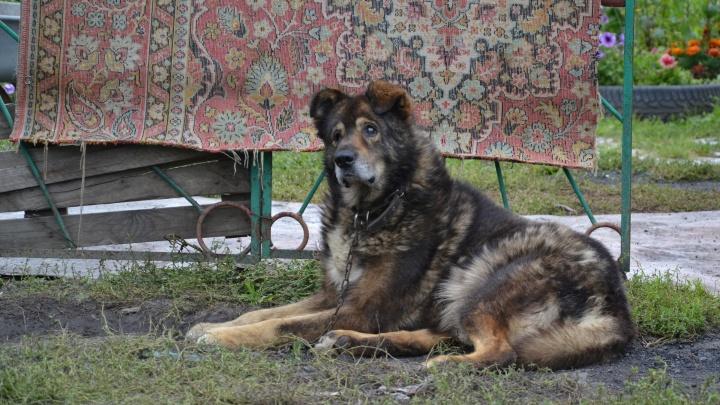 Те, кто останутся после меня: в конце сезона омичи массово бросают на дачах собак и кошек