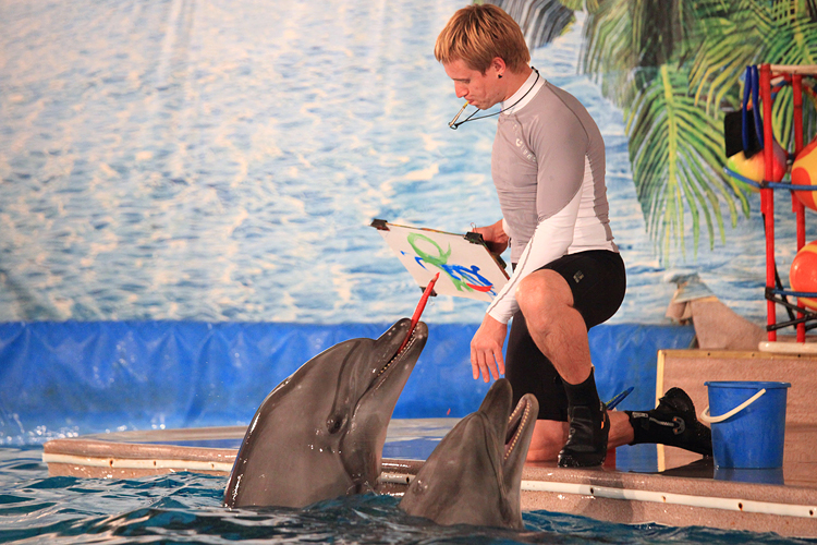 dolphin trainer 33