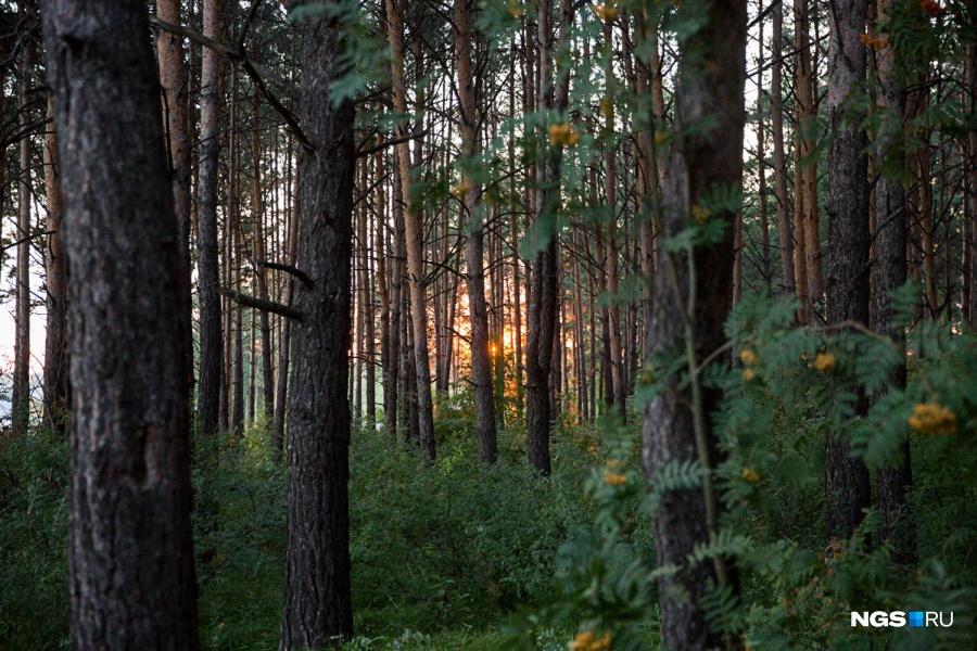 Сергей и Мария специально выбрали место для дома на горе, выходящей в лес, потому что так у них появилась своя дорога среди сосен. Стоил участок почти 1 млн руб.