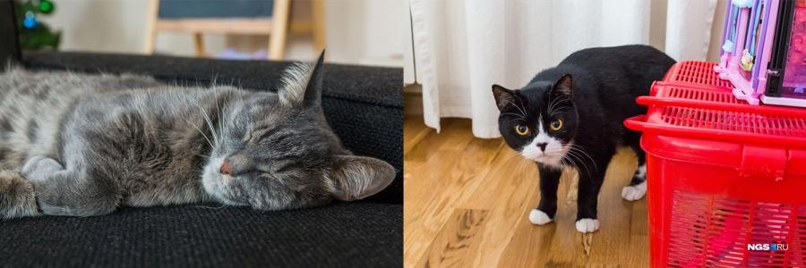 Как это бывает в своих коттеджах, семья Виниа приютила двух бродячих котов — Федю и Кузю. «Они дают много любви, это важно», — улыбается Фред. Отапливается дом газом. По словам Елены, в самый холодный месяц зимы они тратят на него 5–6 тыс. руб., еще около 1 тыс. руб. уходит на электричество и 500–600 руб. на воду.