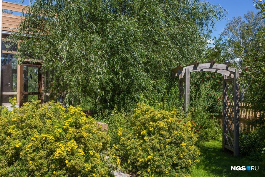 Арка, ведущая на задний двор, служит и для ветрозащиты. Рядом с ней уже два месяца цветет курильский чай. «Из экзотики у меня растут розы, а весной — рододендроны. Также весной очень вкусно благоухают ивы и пионы», — описывает Елена.