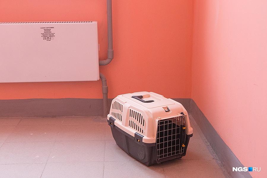 В последнем подъезде самого нового дома «Сибири» перед лифтами 4-го этажа обнаружилась одиноко стоящая переноска с котом. Постучав во все квартиры на 3-м, 4-м и 5-м этажах, мы не застали ни одного человека. Проходивший мимо жилец рассказал, что переноска стоит уже почти неделю, но сам он боится ее трогать — а вдруг там бомба.