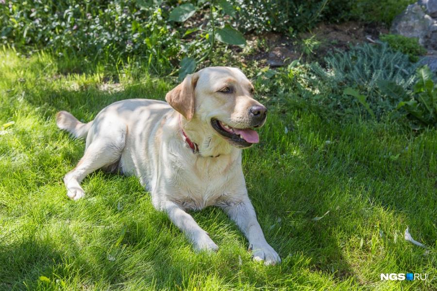 В доме у Павла и Елены живут три собаки — лабрадор, терьер и глухая дворняжка, которую приютили из жалости.