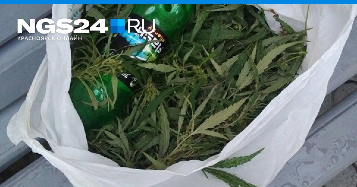 Красноярск новости марихуана что сделать чтобы в анализах не было марихуаны