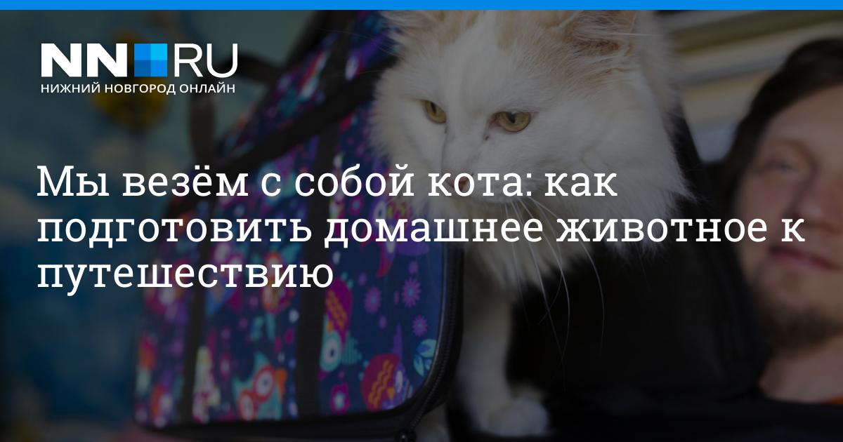 Как перевозить кота в поезде правила и подготовка питомца к поездке