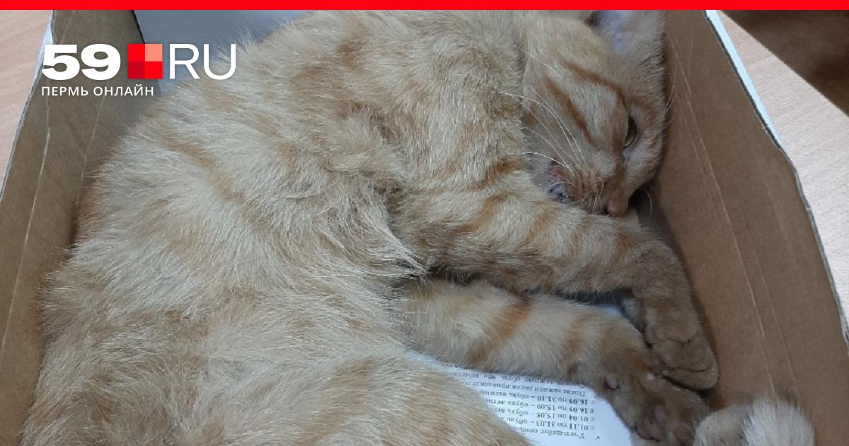 В Соликамске живодеры повесили кота 24 сентября 2019 г