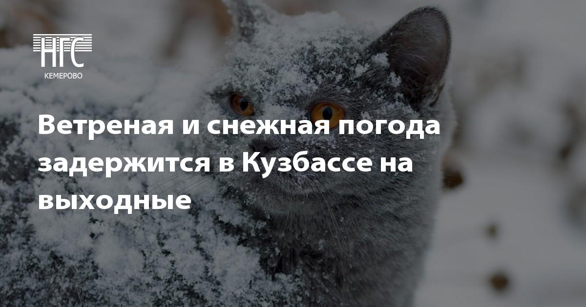 Пушкин аэродром праздник 2017