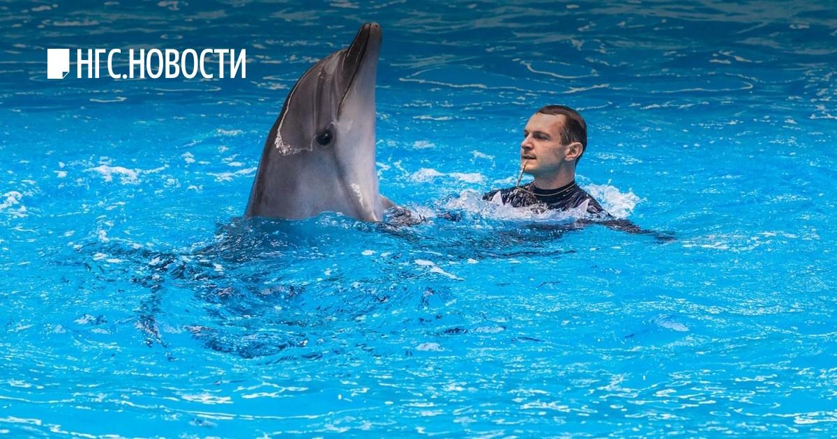С пелагея дельфинами знакомство